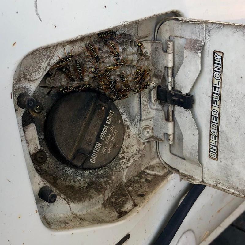 Ein Wespennest hat sich unter dem Tankdeckel eingenistet